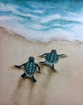 Image result for baby sea turtle pictures